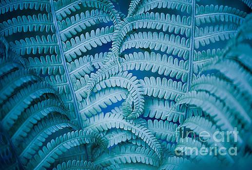 Swirled fern blue foliage macro by Arletta Cwalina