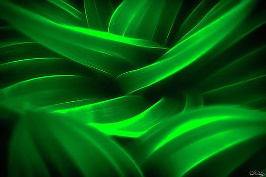 Swirling Green Leaves II by Dee Browning
