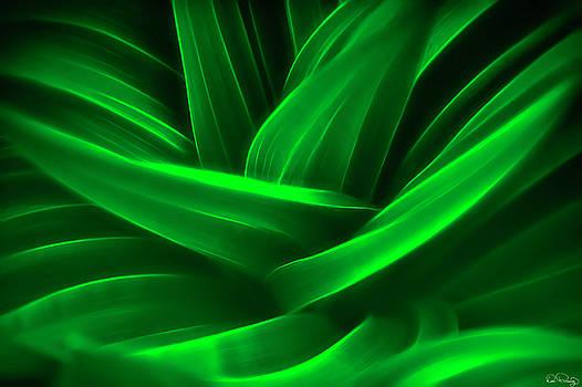 Swirling Green Leaves III by Dee Browning