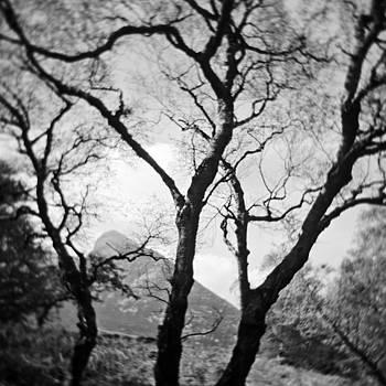 David Taylor - Swirly Arran Trees