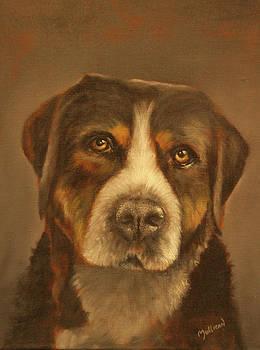 Swiss Mountain Dog by John Neal Mullican