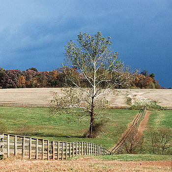 Sycamore, Bascule Farm, Poolesville, Maryland, Autumn, 2001 by James Oppenheim
