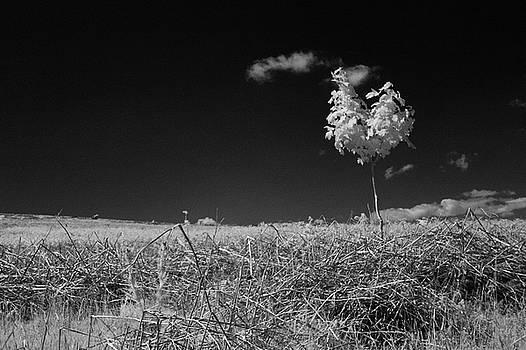 Sycamore by Keith Elliott