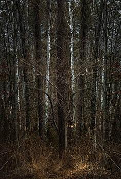 Sycamore Saplings by Mary Nash-Pyott