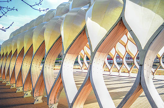 Symmetry in Perspective by Nate Heldman