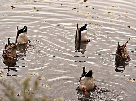 Synchronized Ducks by Liviu Leahu