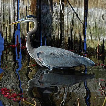 t Blue Heron by Bob O'Dean