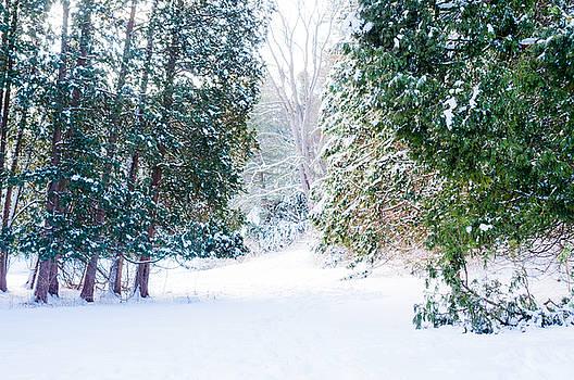 Deep Snow 6 by Stephen Thompson