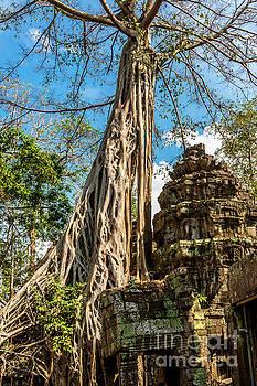 Ta Phrom Tree by Thomas Levine