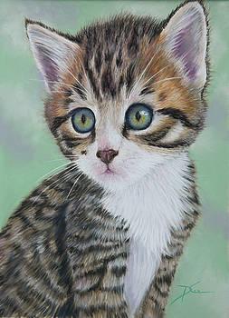 Dee Carpenter - Tabby Cat