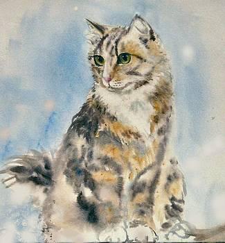 Tabby Cat by Frances Gillotti