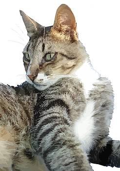 Tracey Harrington-Simpson - Tabby Cat Isolated Background