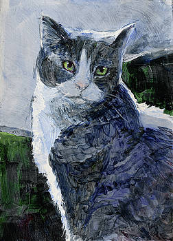 Tabby in a Blue Room by Tracie Thompson