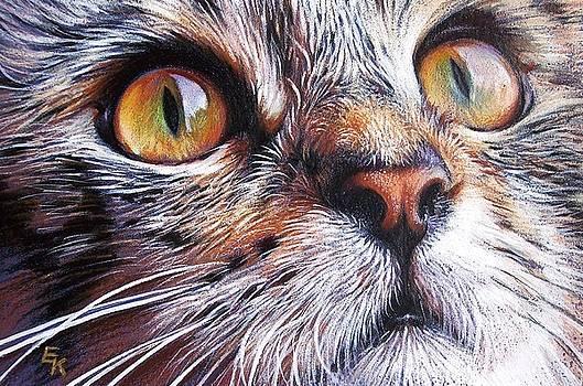 Tabby look 2 by Elena Kolotusha