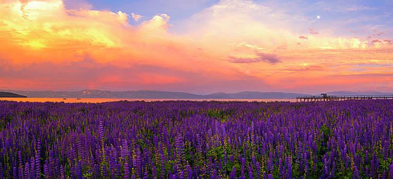 Tahoe City Lupine Sunset by Brad Scott by Brad Scott