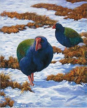 Takahe by Peter Jean Caley