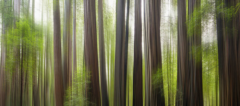 Take me to the forest by Brad Scott