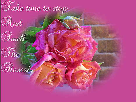 Take Time Roses by Dawn Hay