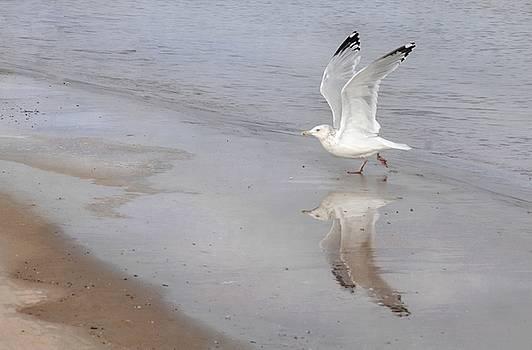 Takeoff by Dan Holm