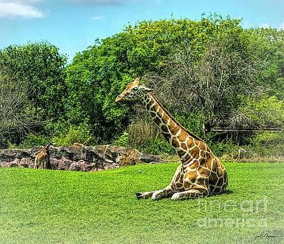 Taking a Break - Giraffe by Jan Mulherin