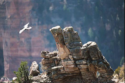 Taking Flight by David Bader
