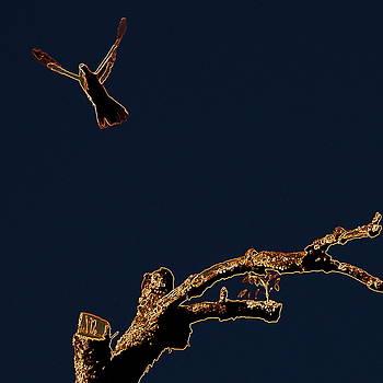 James Hill - Taking Flight