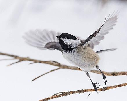 Taking Flight by Jeff Clark