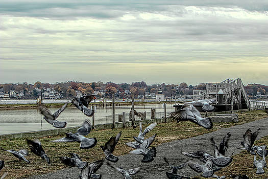 Taking flight by Jeff Folger