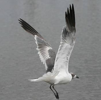 Bonnes Eyes Fine Art Photography - Taking Flight
