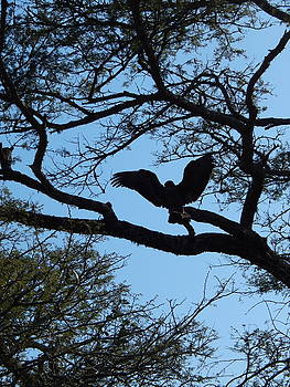 Taking Flight South Africa by Patrick Murphy