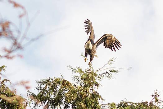 Taking off by Shari Whittaker