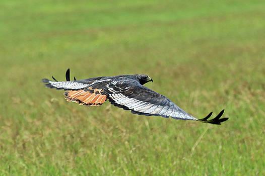 Taking Wing by Ann Sullivan