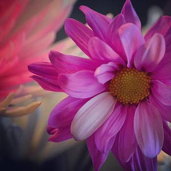 #talented_igers #flower #color by Pete Michaud