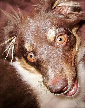 Gwyn Newcombe - Talking Dog