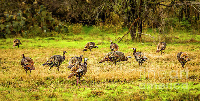 Jon Burch Photography - Talking Turkey