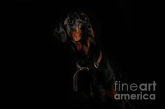 Tall, Dark and Handsome by Randi Grace Nilsberg