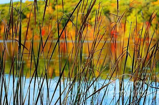 Tall Grass Abstract by Randy Pollard