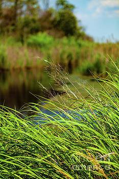 Tall Grass at Boat Dock by George Sheldon