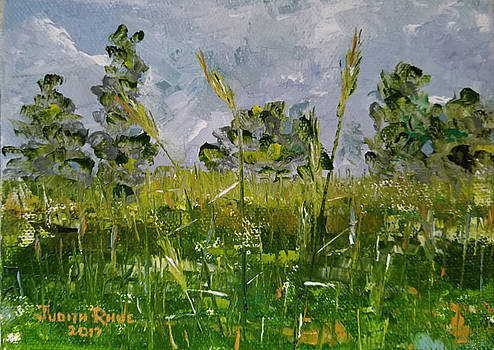 Tall Grass by Judith Rhue