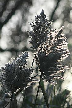 Rich Sirko - Tall Grasses