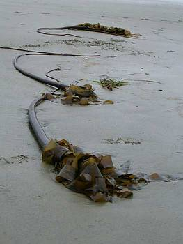 Tall kelp by Claudia Stewart