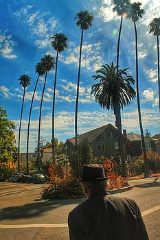 Tall Palms of Berkeley by Philip Hennen