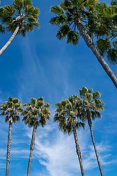 Robert VanDerWal - Tall Palms Meet the Sky