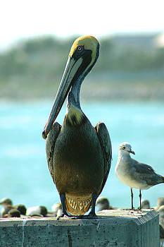 Susanne Van Hulst - Tall Pelican