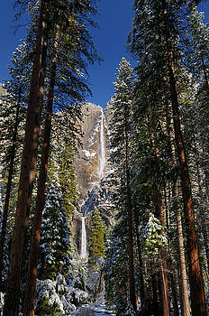 Reimar Gaertner - Tall pines in the valley of Yosemite National Park with both the