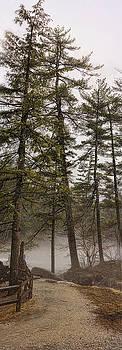 Heather Applegate - Tall Pines Lower Falls