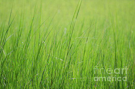 Tall Summer Grass Memories by Dale Powell