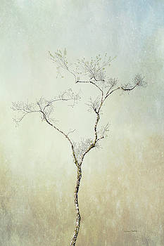Tall Tree by Ramona Murdock