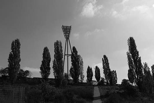 Tall Trees by Michelle Fattibene