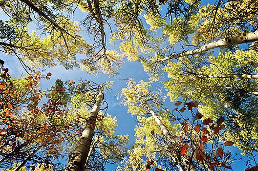 Look Up by Ramona Murdock